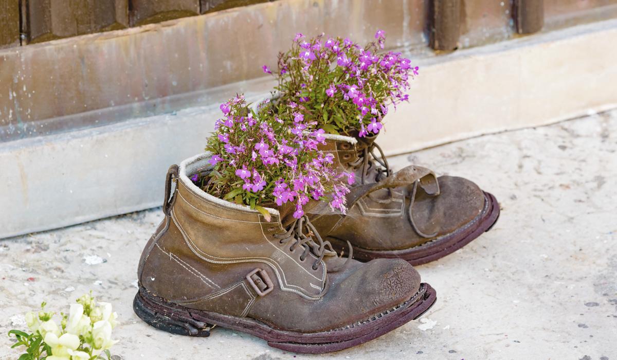 Felicia Oreholm Rosa blommor växer i skor
